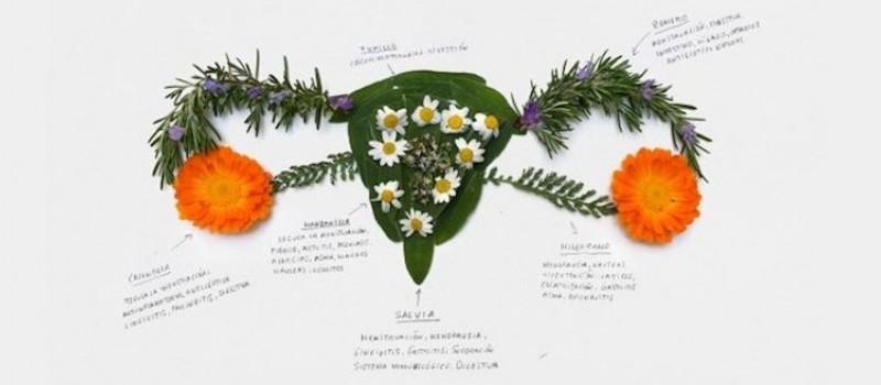 Fitoterapia. Hierbas para equilibrar y evitar desajustes menstruales