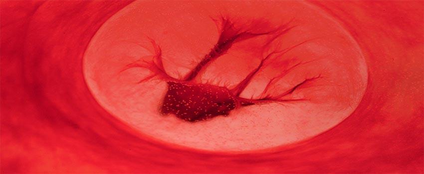 ¿Qué contiene la sangre menstrual?